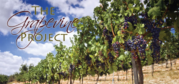 grapevine project