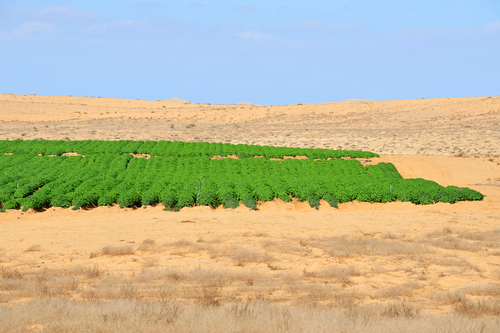 Desert farming in the Negev, Israel.
