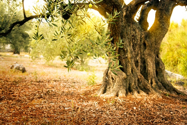 My Olive Tree's sponsorship packages