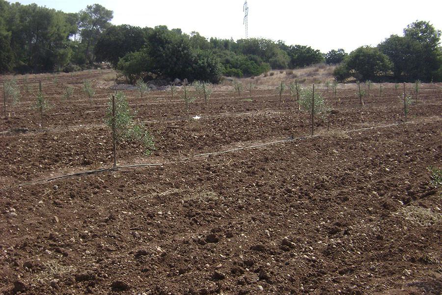 kfar-hahoresh-grove-1