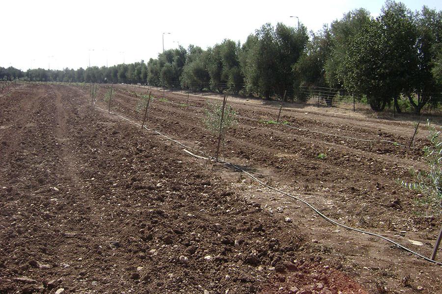 kfar-hahoresh-grove-10