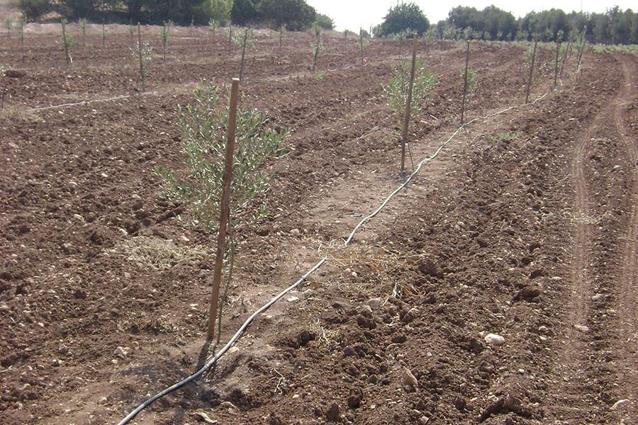 kfar-hahoresh-grove-11