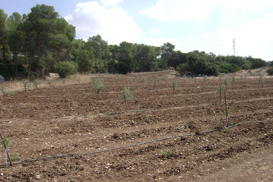 kfar-hahoresh-grove-3