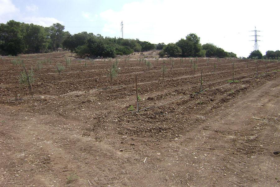kfar-hahoresh-grove-4