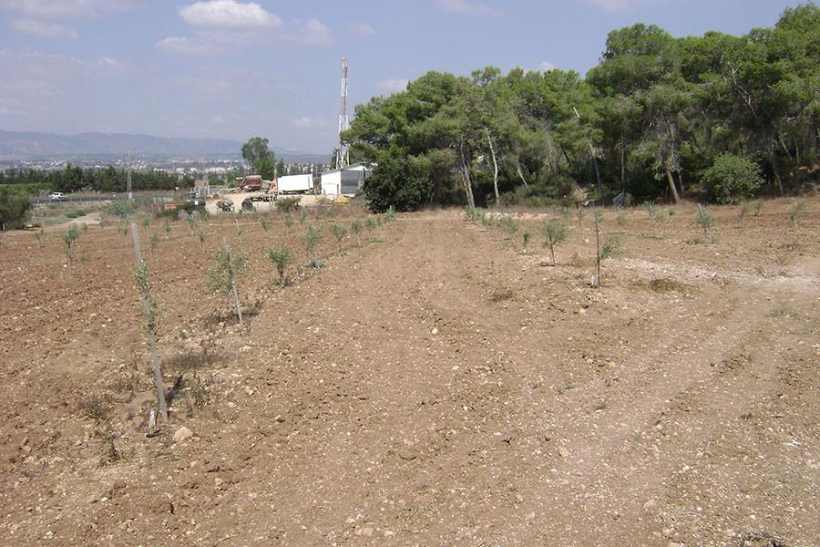 kfar-hahoresh-grove-5