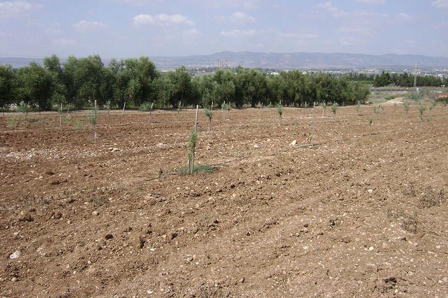 kfar-hahoresh-grove-6