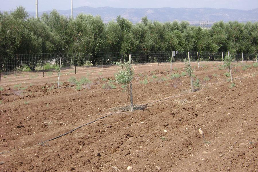 kfar-hahoresh-grove-7
