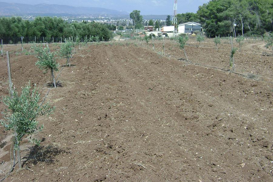 kfar-hahoresh-grove-8
