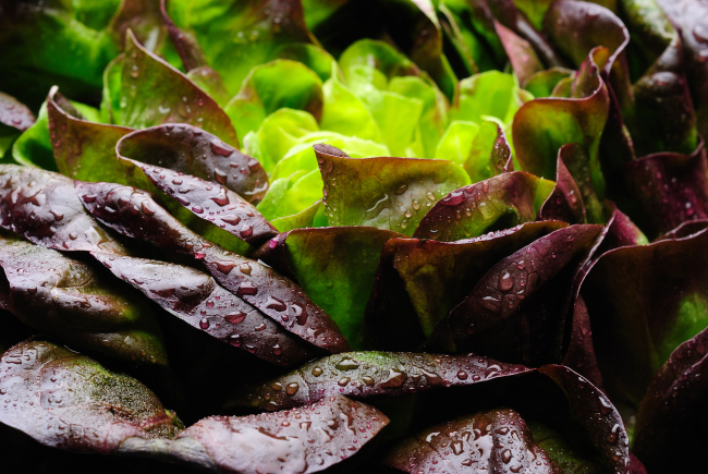 Red Leaf Lettuce Salad