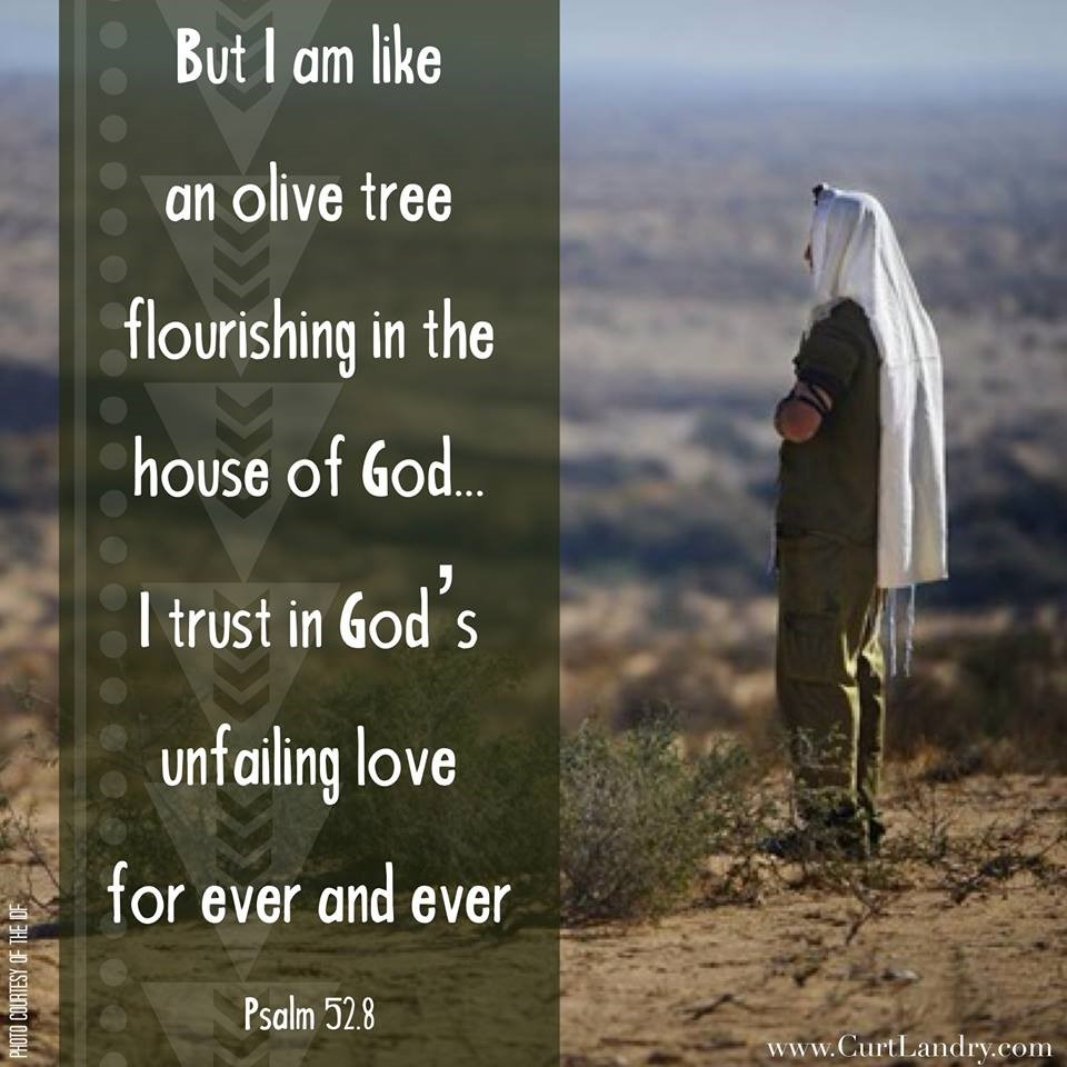 "Psalm 52.8 when he wrote: ""But I am like an olive tree flourishing in the house of God…""?"