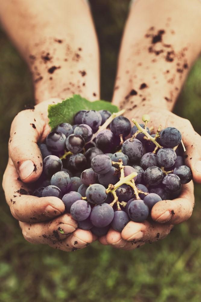 81 Grapes