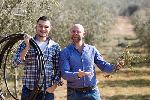 About Olive Tree Pruning