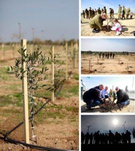 MOT-tree-planting