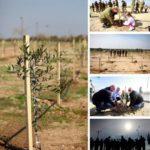 jubilee planting