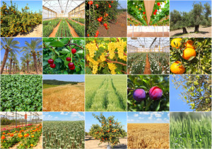 Agriculture production view and plants. Israel photo collage