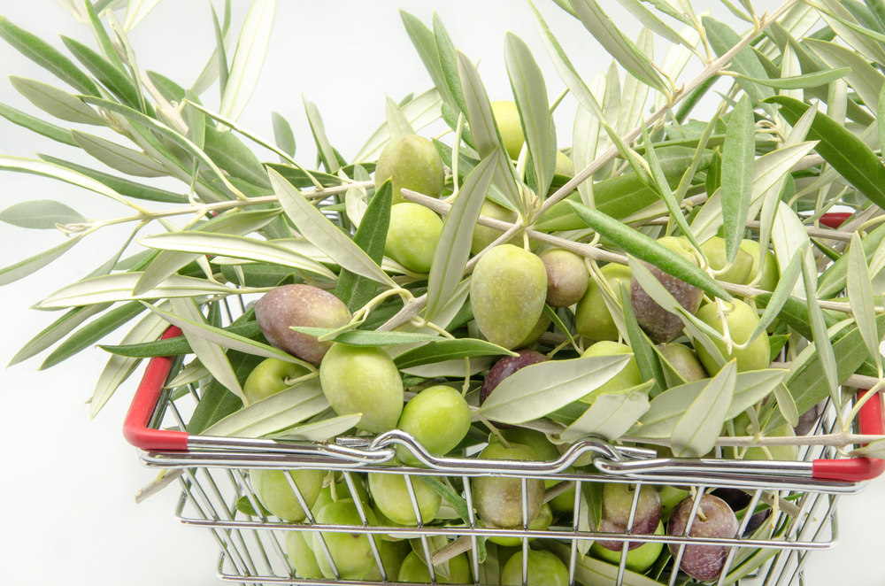 This Year's Olive Harvest Expected to Be Better Than 2014