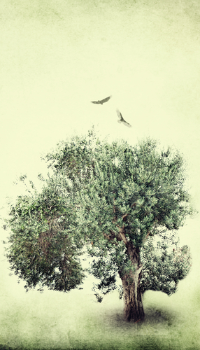One Million Olive Trees | Bringing agriculture to a barren wasteland