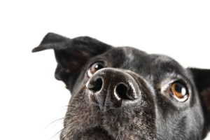 Is Olive Oil Good For Dogs?