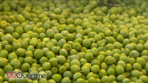 60 minutes olive oil mafia