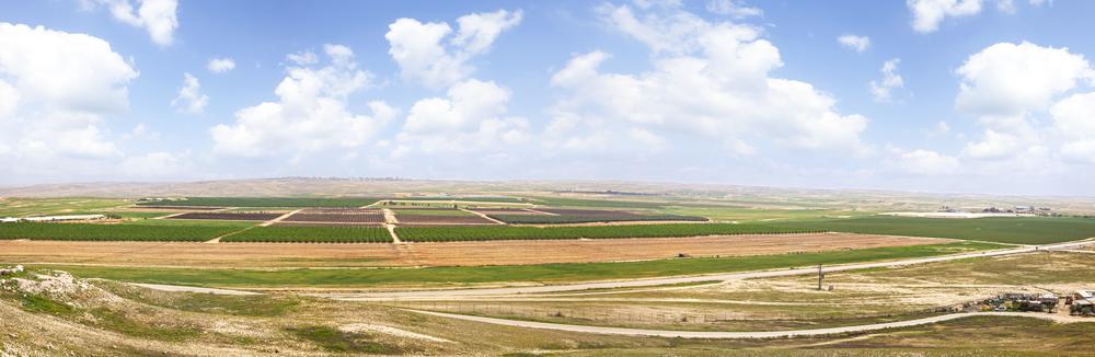 negev israel olive grove