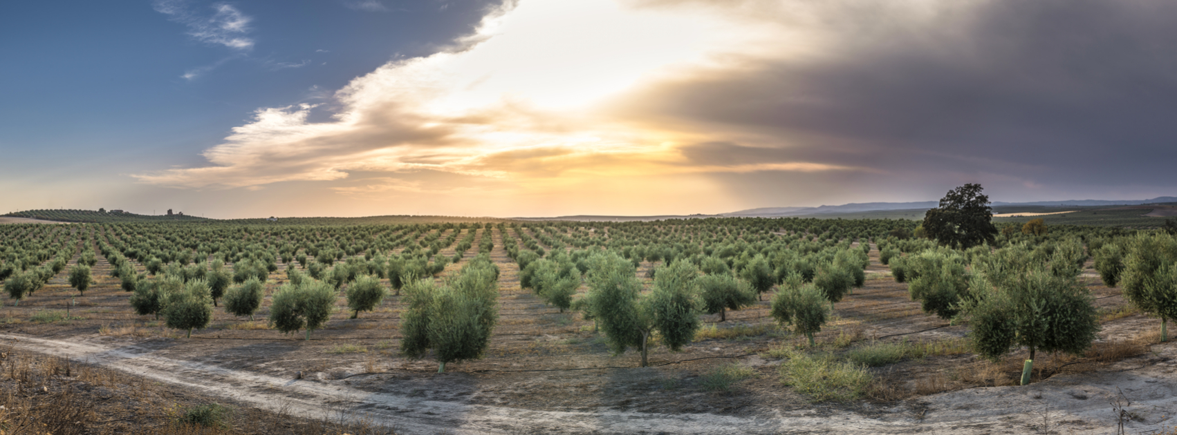 One million trees to be planted in Israel