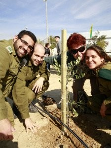 Olive tree soldiers