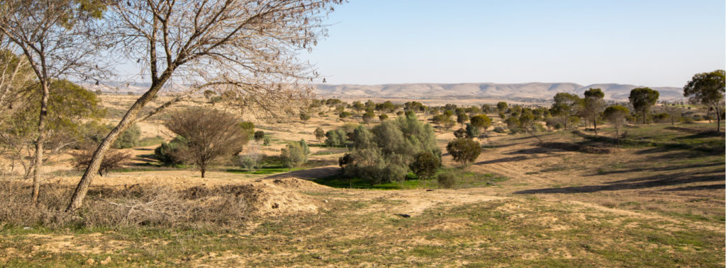 Agriculture and the People of the Negev Desert