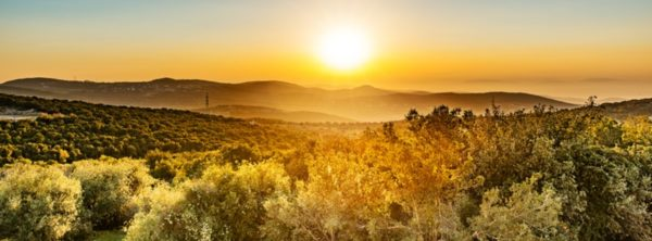 Tu B'Shevat: A Time to Plant into Israel's Future