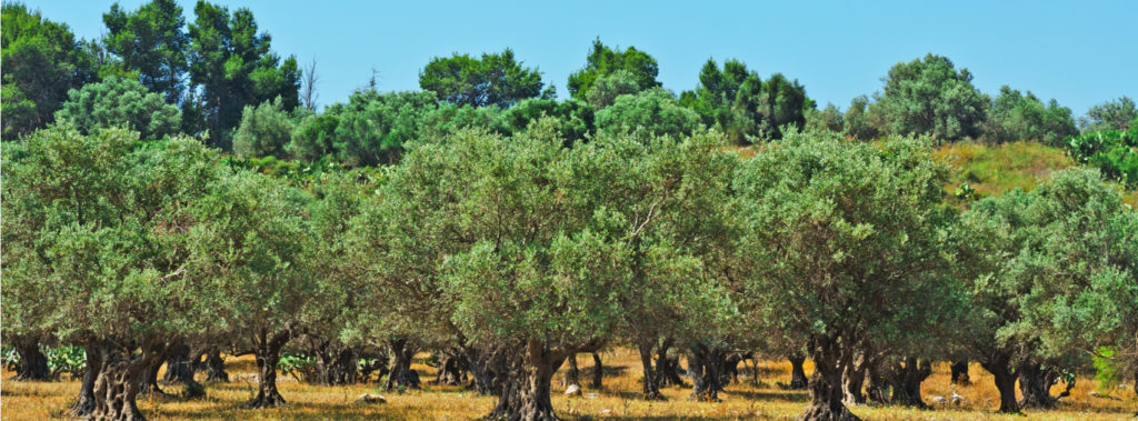 VIDEO: Planting Olive Trees on Largest Military Base in Israel