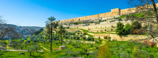 My Olive Tree: The Importance of the Kidron Valley