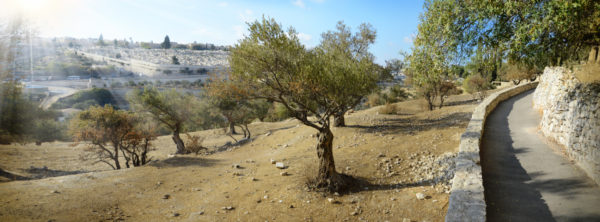 Israel's Family Tree | Who Is Israel in the Bible?