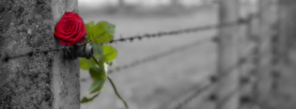 Passover and the Holocaust Survivors