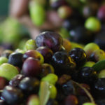 Olives and Olive Oil in Israel's Culture
