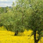 Desert Restoration: Don't Forget About God's Garden! Make Israel's Desert Bloom This Spring!