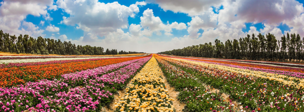 Sharing Is Caring: How Israel Develops Farms to Change the World