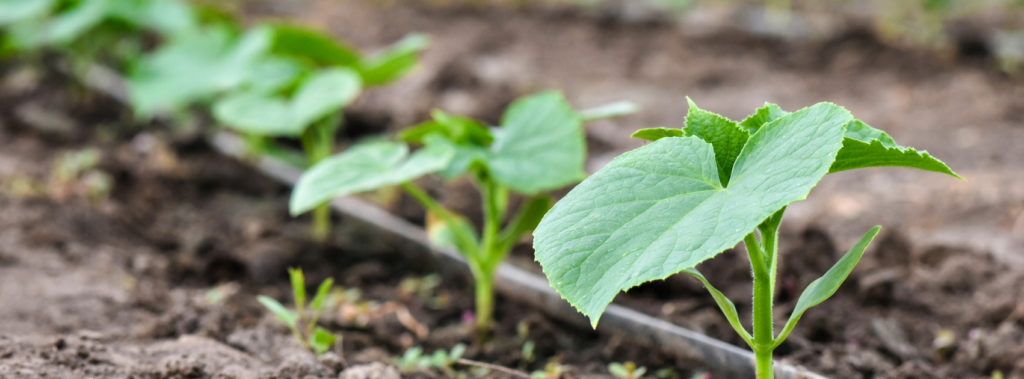 Sustainable Agriculture | What Is It and Why Does It Matter?