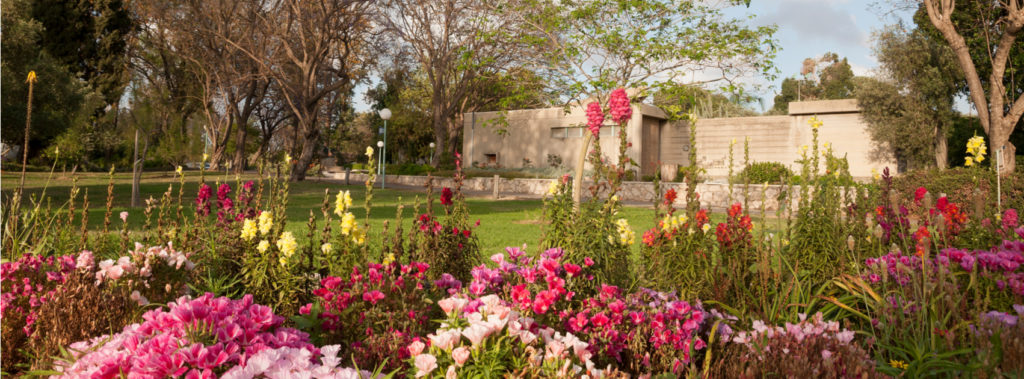 What Is the Difference Between a Moshav and a Kibbutz in Israel?