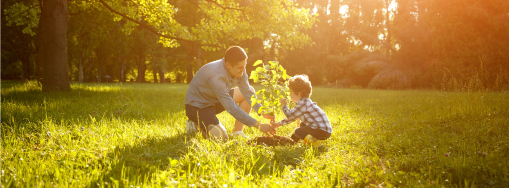 How Planting Trees Helps the Environment