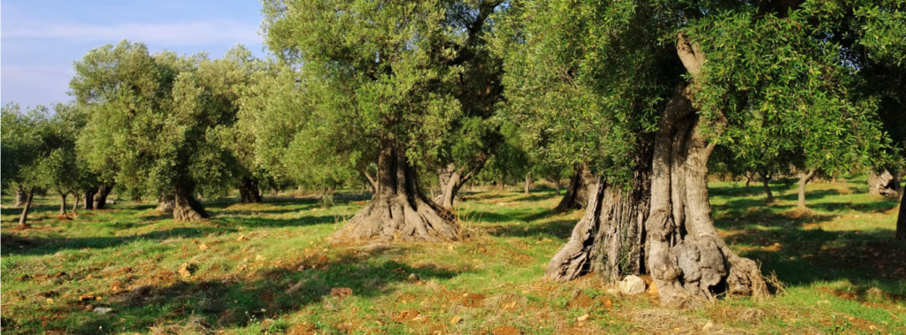 Being Rooted in Christ