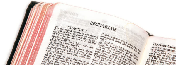 The Two Olive Trees in the Bible | Zechariah 4