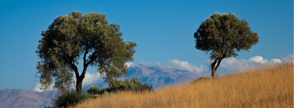 The Two Olive Trees in the Bible | Revelation 11