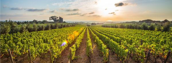 Vineyards in the Word: Inheritance