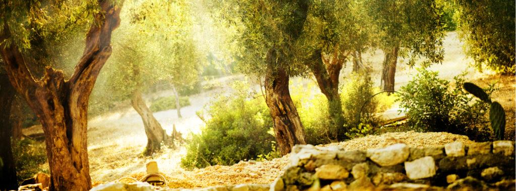 The King's Valley: Golden Harvest