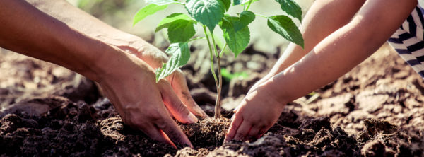 The Legacy of Stewardship